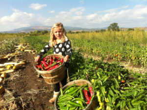 Programs to help organic farming